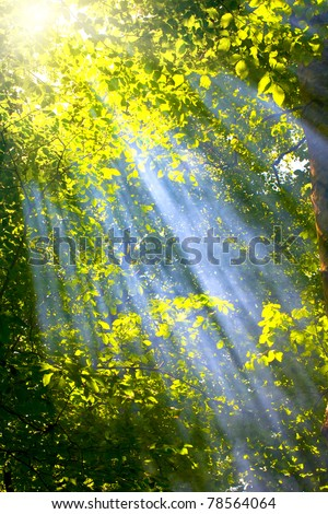 sun rays in forest - stock photo