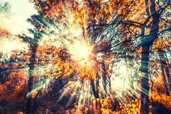 sun rays in forest autumn time,abstract colorful background
