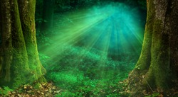 Sun rays in forest. Magical woods landscape, old thick mossy trees, rays of light, fairy tale