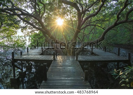 sun rays in the mangrove...