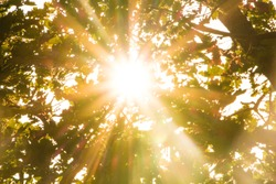 Sun rays pass through foliage trees. Beautiful nature wild landscape sunrise with trees. Lens flare and sun natural sunny background.