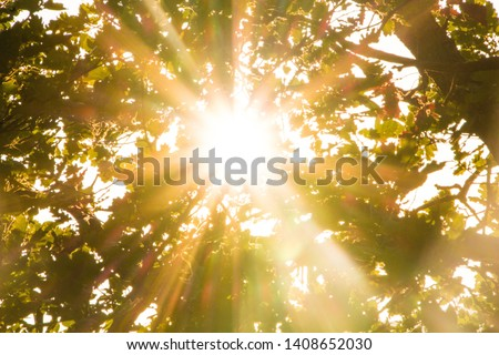 Sun rays pass through foliage trees. Beautiful nature wild landscape sunrise with trees. Lens flare and sun natural sunny background. Foto stock ©