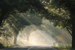 Sun rays pass through the trees along the road on a foggy morning.