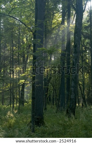 Sun rays shine through branches and trunks - stock photo