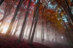 Sun rays shine through the foggy autumn forest