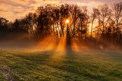 Sun rays shine through tree silhouette in fog, soft moody lighting in haze on frozen grass in meadow at dawn in autumn.