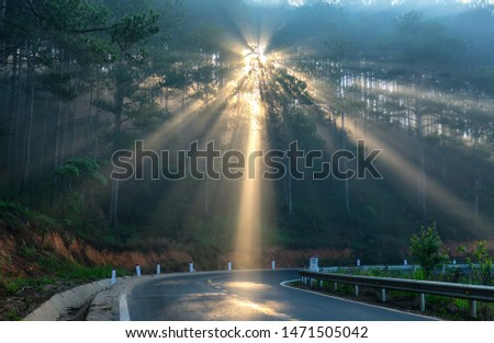 Sun rays shining down through the pine forest road foggy morning, shimmering ray beam shines beneath fanciful to greet the new day in the suburbs on the plateau #1471505042