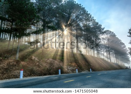 Sun rays shining down through the pine forest road foggy morning, shimmering ray beam shines beneath fanciful to greet the new day in the suburbs on the plateau #1471505048