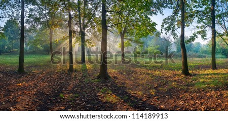 Sun rays shining through branches of trees in the oak wood, panorama