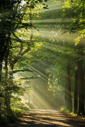 Sun rays shining through the trees at a lane in the forrest.