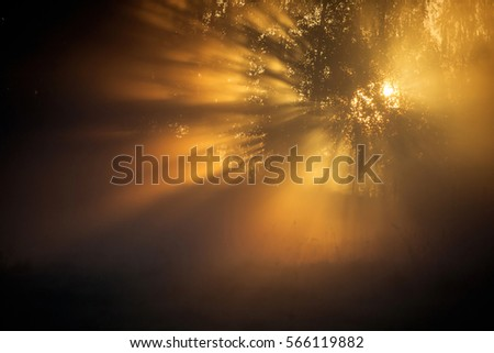 Sun rays shining through the trees early one morning. #566119882