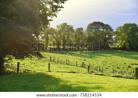 sun rays through the trees at sunset, Ireland countrside