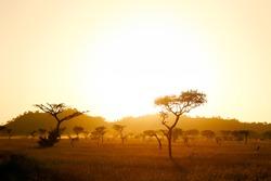 Sun rise on the africa savannah