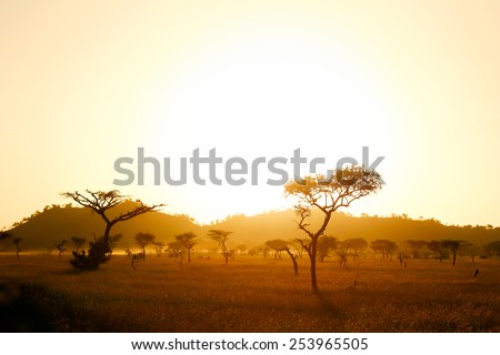 Sun rise on the africa savannah