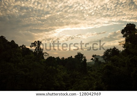 Sun rise view over the rain forest.