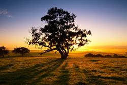Sun rises over the Clare Valley, South Australia