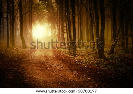 sun rising in a forest with fog