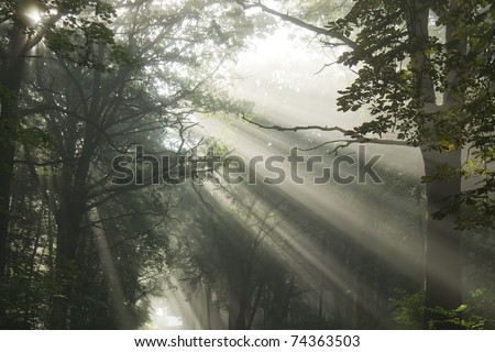 Sun's rays, visible through the trees in the misty morning