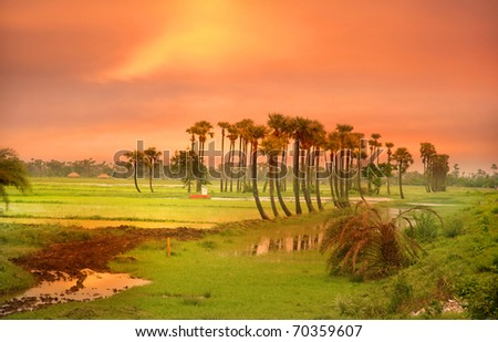 Sun set sky over paddy fields in India - stock photo