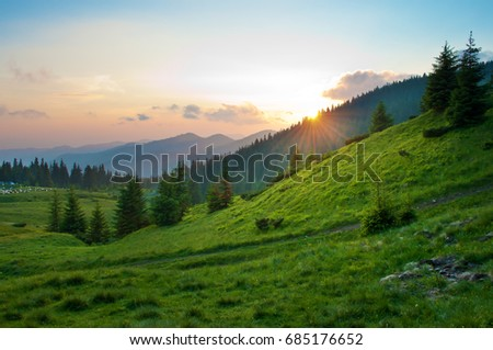 Sun setting behind spruce trees on a lush green slope. Tiny figures of sheep in the distance. Several clouds in the sky at sunset. Warm summer evening. Marmarosh range, Carpathian mountains, Ukraine