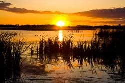 Sun setting beyond a swamp or pond.