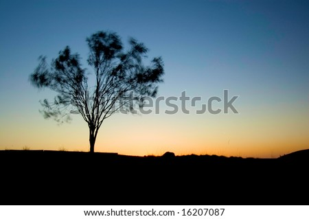 sun setting with tree in foreground moving from wind