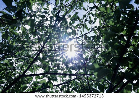 Sun shine Dazzling light Shining green #1455372713