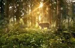 Sun shines into a fairytale forest