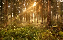 Sun shines into Forest