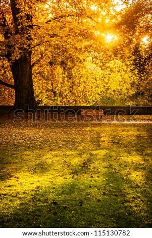 sun shining into an park in autumn
