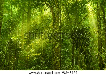 Sun shining into tropical forest - stock photo