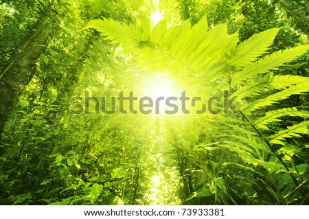 Sun shining into tropical forest, low angle view. - stock photo