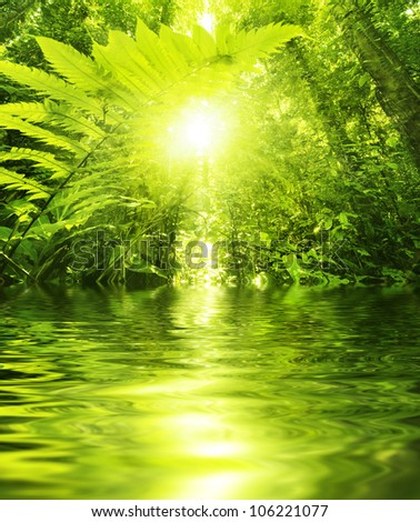 Sun shining into tropical forest, low angle view with water reflection