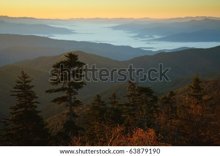 sun shining on spruce trees and foggy valley at sunrise