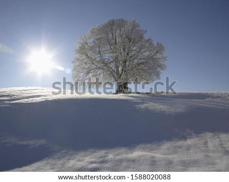 Sun shining over tree in snow, Bavaria, Germany