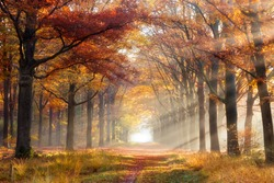 Sun shining through a forest on a path covered with fallen leaves during Autumn.