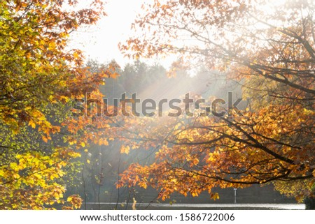 Sun Shining Through Branches Of Autumn Tree By Lake
