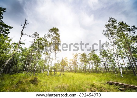 Sun shining through the trees in a clearing in a green forest in the spring #692454970