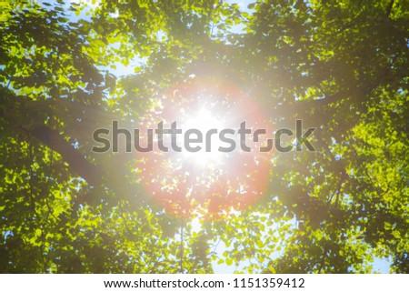 Sun shining through the trees in a dreamy blur.  #1151359412