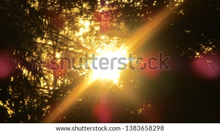 Sun shining through the trees in the afternoon #1383658298