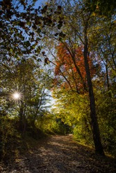 Sun shining through the trees with autumn foliage colors gold yellow green red orange and blue sky on a cool crisp morning in the park, leaf covered dirt foot path or trail