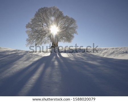 Sun shining through tree in snow, Bavaria, Germany