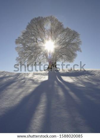Sun shining through tree in snow, Bavaria, Germany