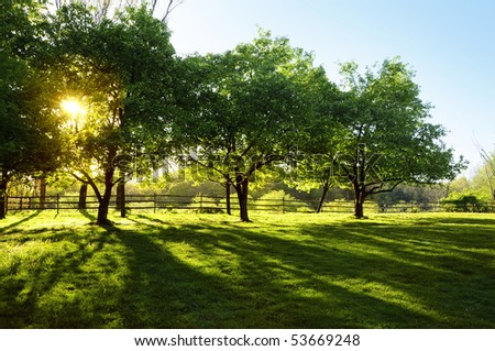 Sun shining through trees on a farm