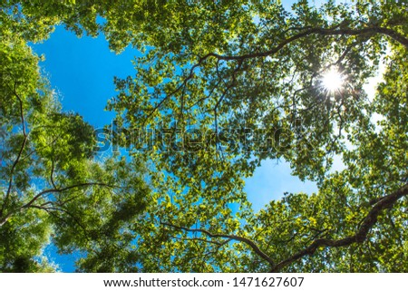 sun shining through treetops in summer Beautiful sun shining through fresh and green leaves at noon #1471627607