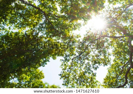 sun shining through treetops in summer Beautiful sun shining through fresh and green leaves at noon #1471627610