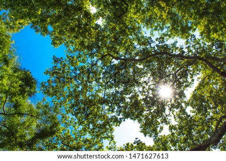 sun shining through treetops in summer Beautiful sun shining through fresh and green leaves at noon #1471627613