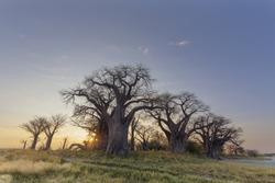Sun starburst at Baines Baobabs