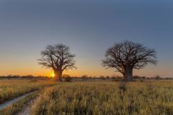 Sun starburst at sunrise at Baines Baobab campsite