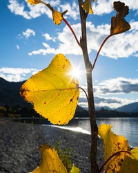 Sun starburst shining through autumn leaves on the shore of Lake Wanaka, South Island. Vertical format